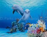Dolphin Sweet