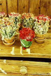 Rebeccas Dried Roses