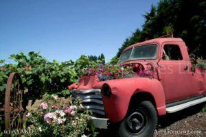 00006-Sanguna on the Pink Old Truck