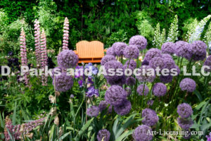 0001-Orange Bench in the Allium Flower Garden