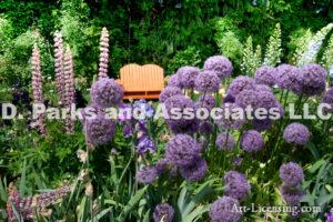 0001-Orange Bench in the Allium Flower Garden
