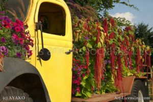 00216-Amaranthus and Sanguna on Yellow Truck