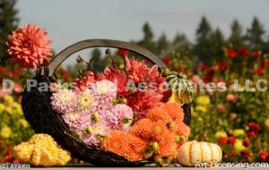 0095-Dahlia Bouquets with Pumpkins