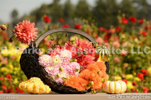 0100-Dahlia Bouquets with Pumpkins