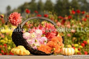 0100-Dahlia Bouquets with Pumpkins