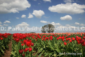 0156-Tulip Field