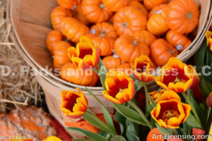 0445-Pumpkins and Tulips