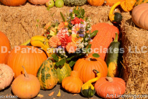 0539-Dahlia Bouquet and Pumpkins