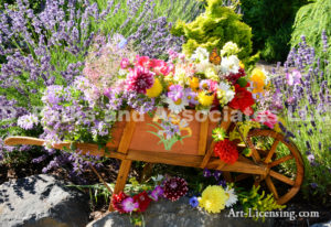 1464-Dahlia and Flower Bouquets in Wheelbarrw Lavender background in July