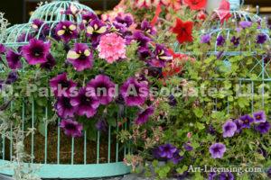 1593-Petunia in Bird Cage