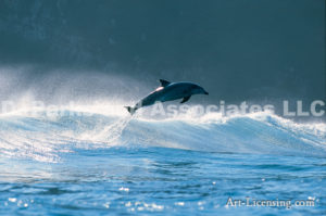 Single Dolphin in Africa