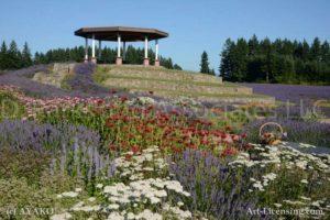 5134-Lavender,Rudbeckia and Gazebo Garden