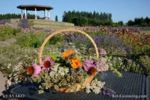 5149-Rudbekia Flower Basket and Gazebo in Lavender Garden