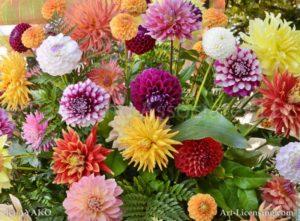 6768 Dahlias Bouquet