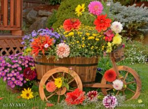 6834-Dahlia-Aster-Chrysanthemum-Butterfly-Wooden Wagon