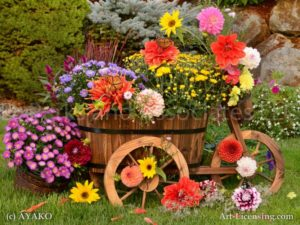 6862-Dahlia-Aster-Chrysanthemum-Butterfly-Wooden Wagon