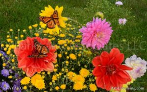 6897-Dahlia and Butterfly