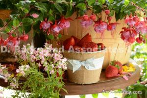 7303-Fuchsia and Strawberries