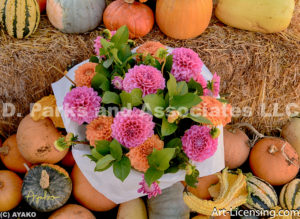 9604-Dahlias and Pumpkins