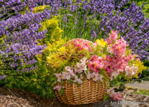 Flower Basket in Lavender Garden