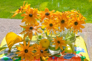 Yellow Rudbeckia in glasses