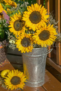 Sunflowers in the Can