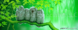 Owl - Yawning