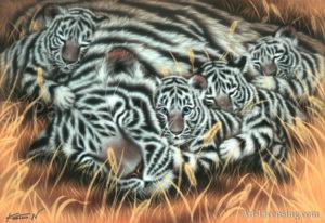 Tiger-Afternoon Nap