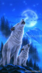 Wolf - Teaching