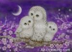 Kayomi Harari - Owls and Hummingbirds