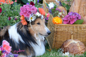 0592 Flowers on Bill Sheltie Dog-by AYAKO
