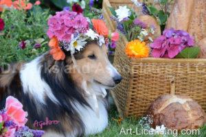 0592 Flowers on Bill Sheltie Dog-by AYAKO