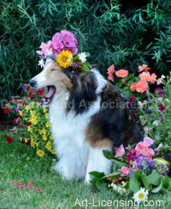 0723-Flowers-on-Bebe-Sheltie-Dog