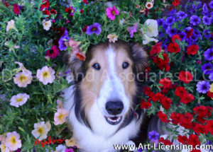 1156-Petunias Surrounding Bebe Sheltie Dog Face-by AYAKO
