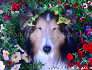 1188-Petunias on Bill Sheltie Dog-by AYAKO