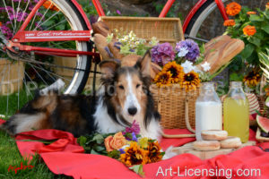 1682-Red Bicycle Picnic-with Sheltie dog-by AYAKO