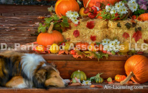 3845-Fall setting Pumpkins Maple leaveswith Sheltie Dog-byAYAKO