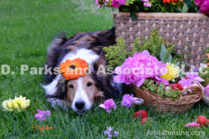 8281-Garbela flower on Bebe Sheltie Dog Head-by AYAKO