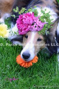 8410S-Peony flower on Bebe Sheltie Dog Head-by AYAKO