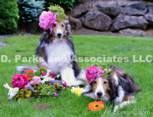 8417S-Bebe and Bill Sheltie Dogs with Flower Bouquet-by AYAKO