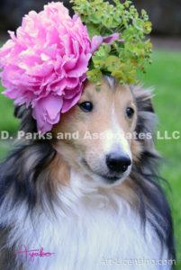 8428-Peony flower on Bill Sheltie Dog Head-by AYAKO