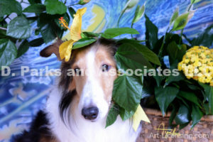 8554-Yellow Hibiscus on Bebe Sheltie Dog-by AYAKO