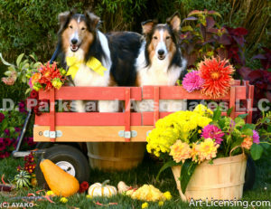 9843-Dahlias Pampkins Shetland Sheepdogs on the Red Wagon-by AYAKO