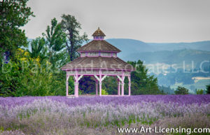 0018S-Gazebo in the Lavender Farm