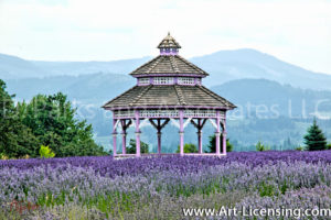 0022S-Gazebo on the Lavendar Field