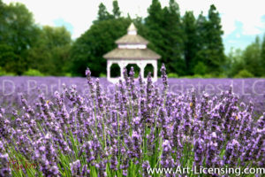 0076S-Lavendar Garden with Gazebo