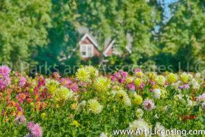 2623S-Dahlia Garden