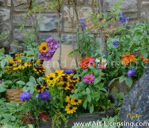 8367S-Rudbeckia Zinnia Summer Garden Flowers