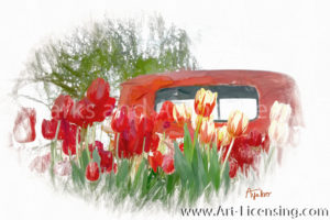 9984SRH-Red Tulips on Red Truck
