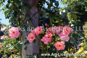 9240S-Pink Roses